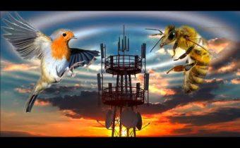 Vtáky a včely Zahubí 5G aj ľudstvo?